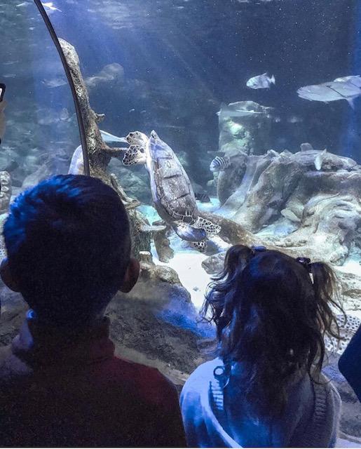 SEA LIFE Charlotte-Concord Aquarium